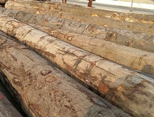 杭州榉木原木